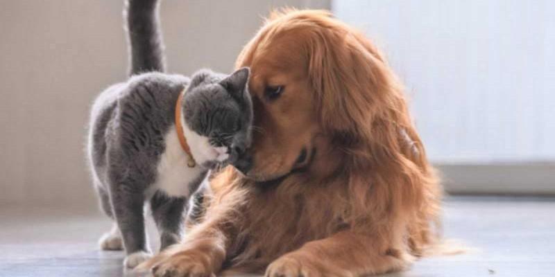 Disponibles citas para esterilización de mascotas